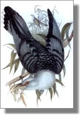 bird_painting