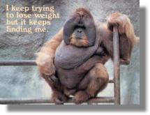 fat monkey.jpg