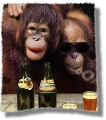 funny-monkey.jpg
